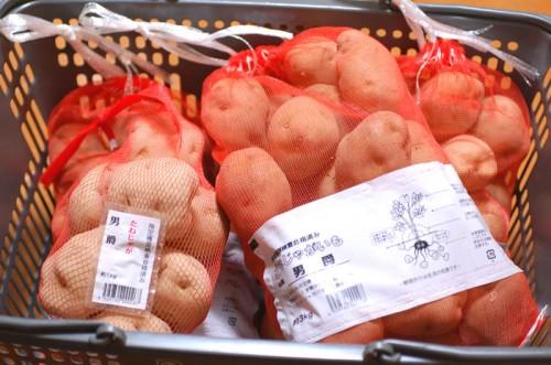 春ジャガイモの種芋(男爵)