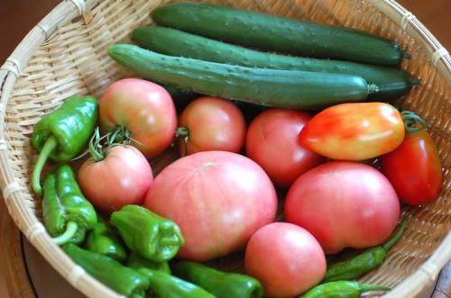 夏野菜各種